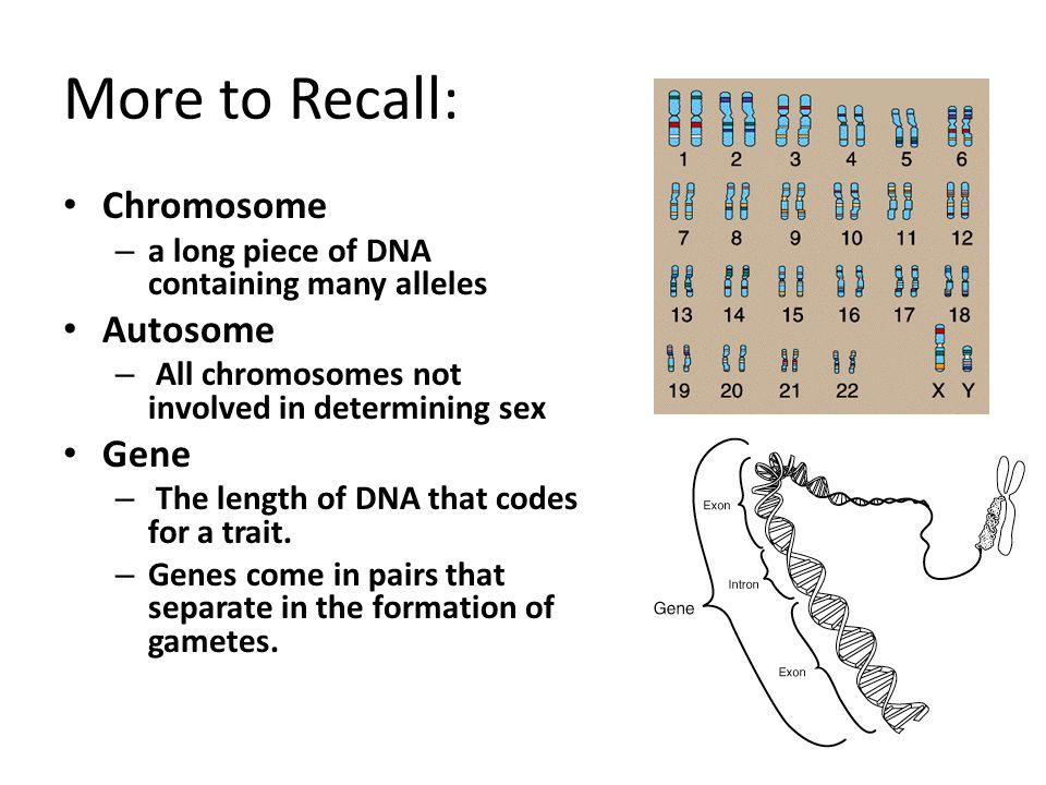 More to Recall: Chromosome Autosome Gene