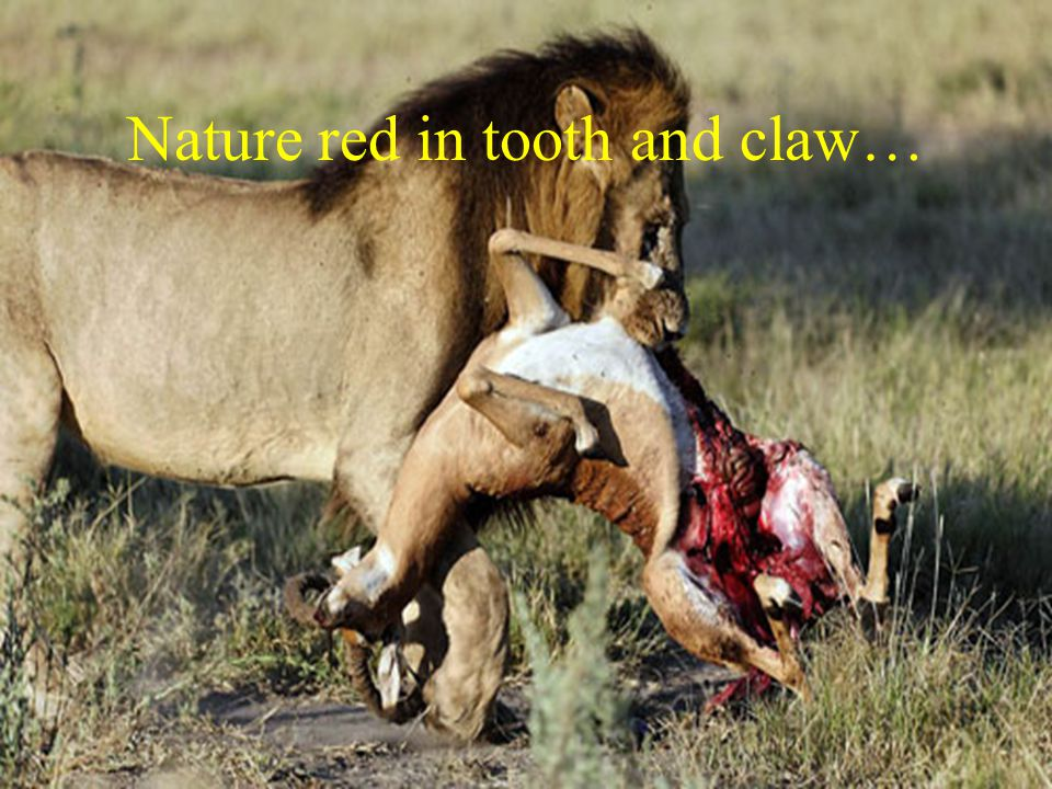 Nature red in tooth and claw…