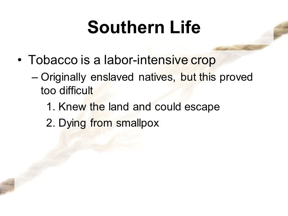 Southern Life Tobacco is a labor-intensive crop