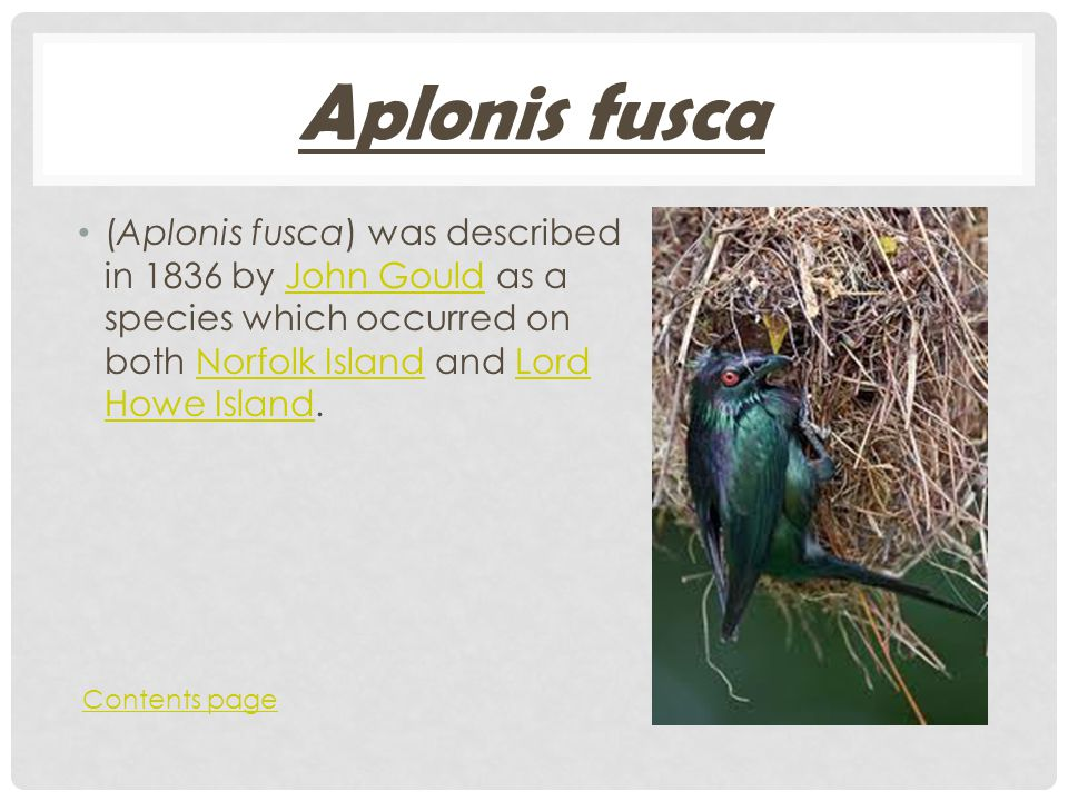 Aplonis fusca (Aplonis fusca) was described in 1836 by John Gould as a species which occurred on both Norfolk Island and Lord Howe Island.