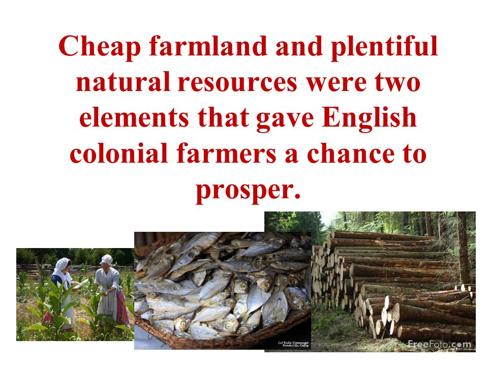 Cheap farmland and plentiful natural resources were two elements that gave English colonial farmers a chance to prosper.