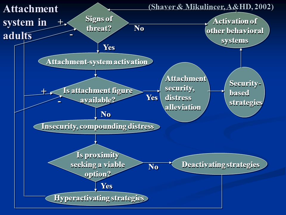 Attachment system in adults
