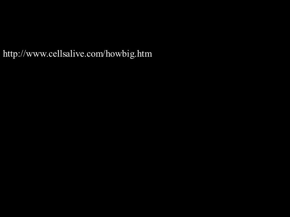 http://www.cellsalive.com/howbig.htm