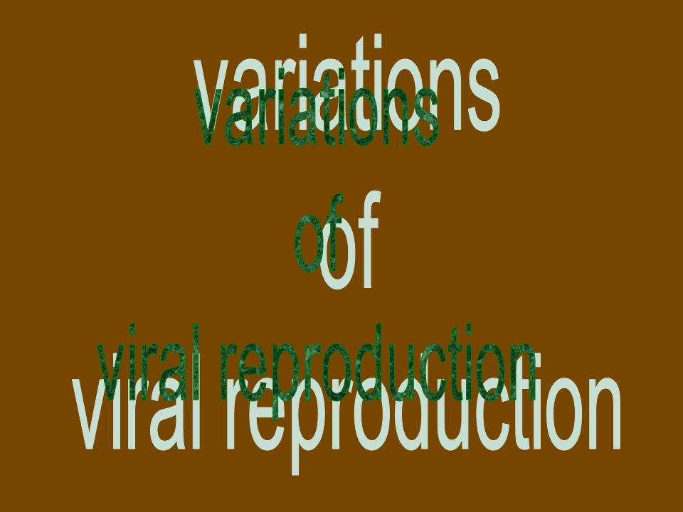 variations of viral reproduction