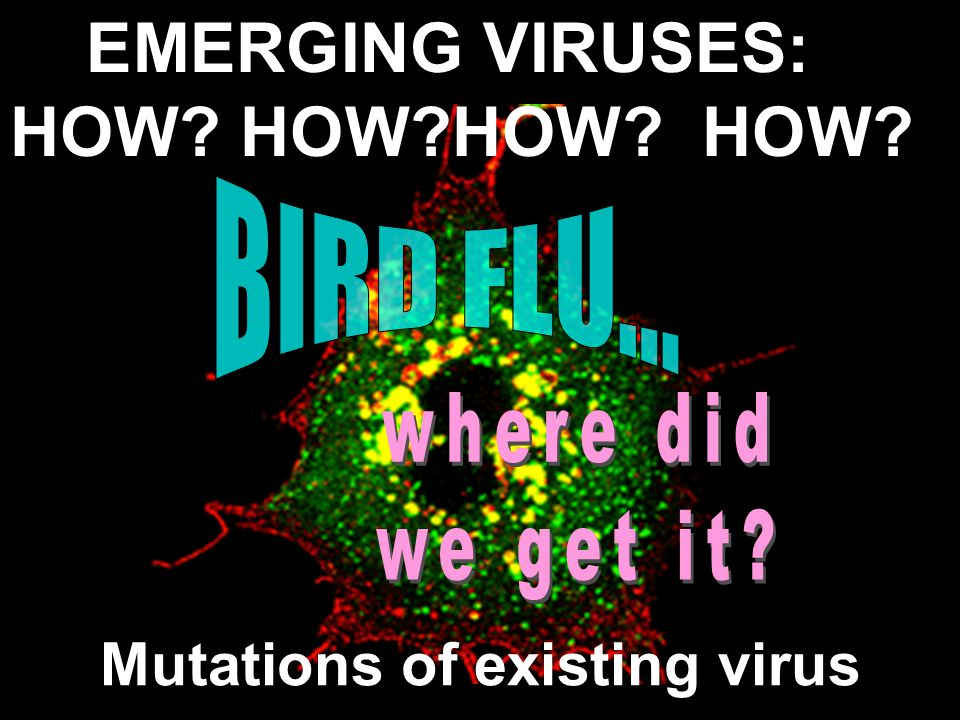 Mutations of existing virus