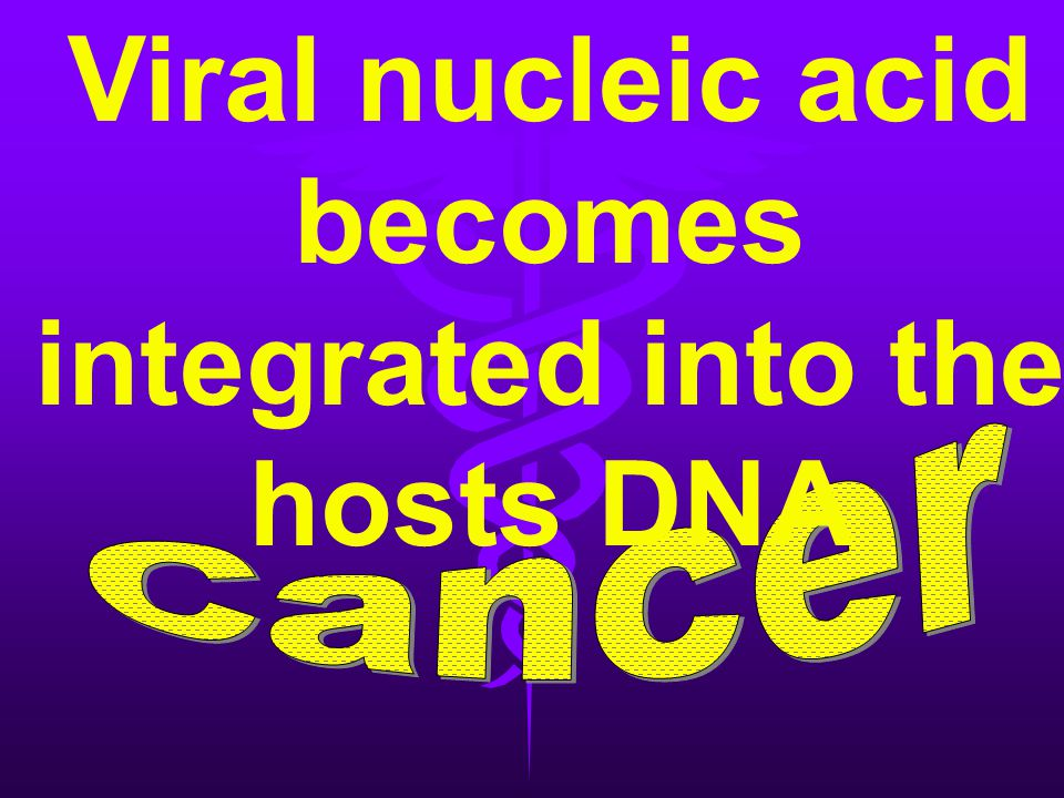 Viral nucleic acid becomes integrated into the hosts DNA