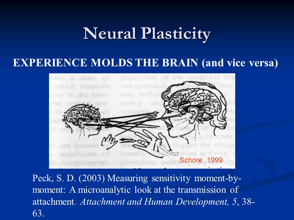 Neural Plasticity EXPERIENCE MOLDS THE BRAIN (and vice versa)