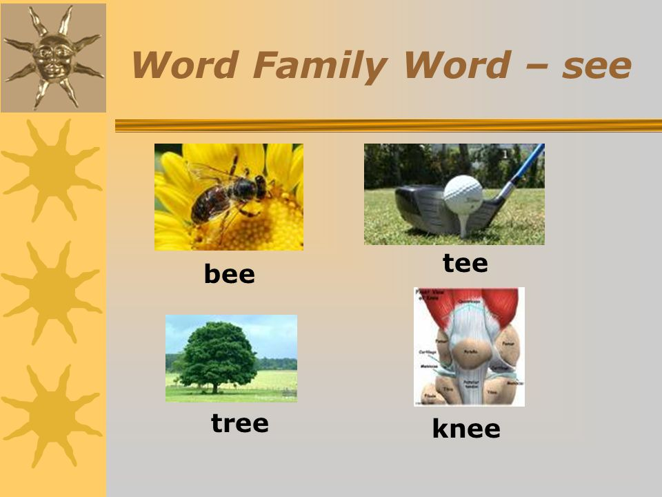 Word Family Word – see tee bee tree knee