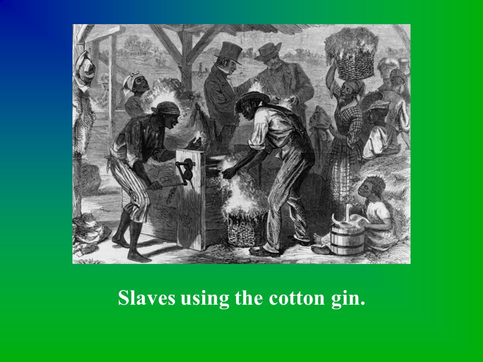 Slaves using the cotton gin.