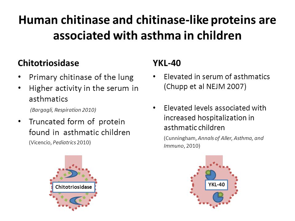 Human chitinase and chitinase-like proteins are associated with asthma in children