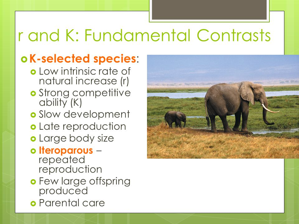 r and K: Fundamental Contrasts