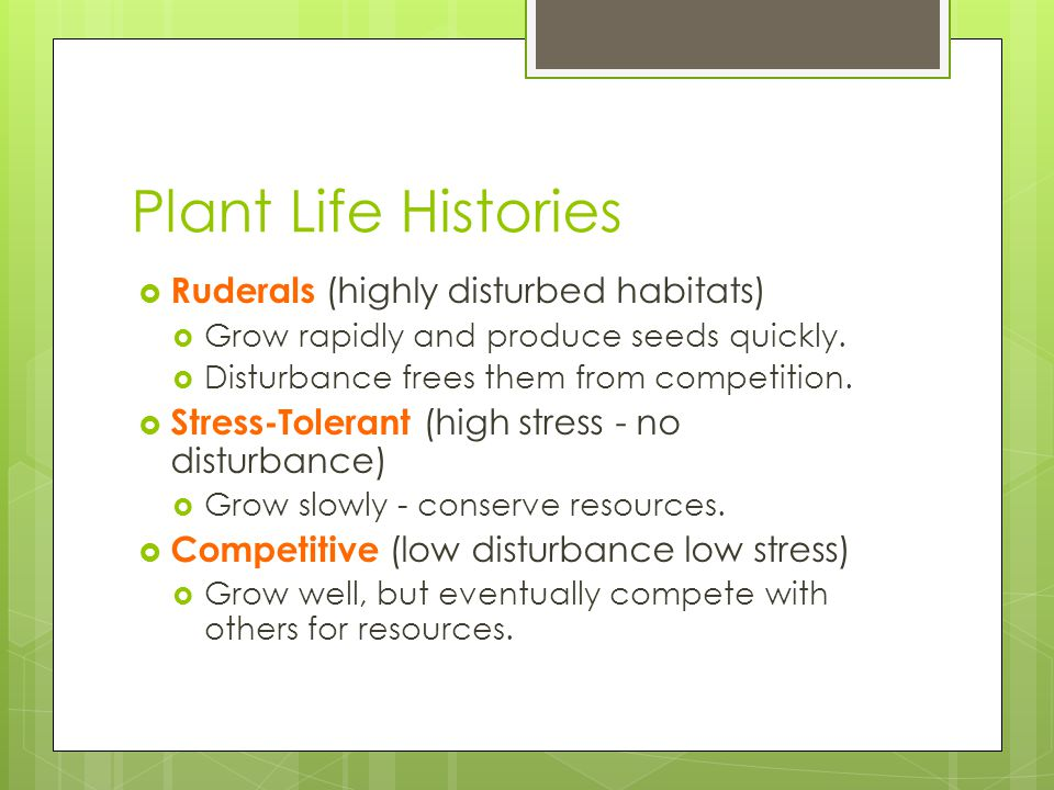 Plant Life Histories Ruderals (highly disturbed habitats)