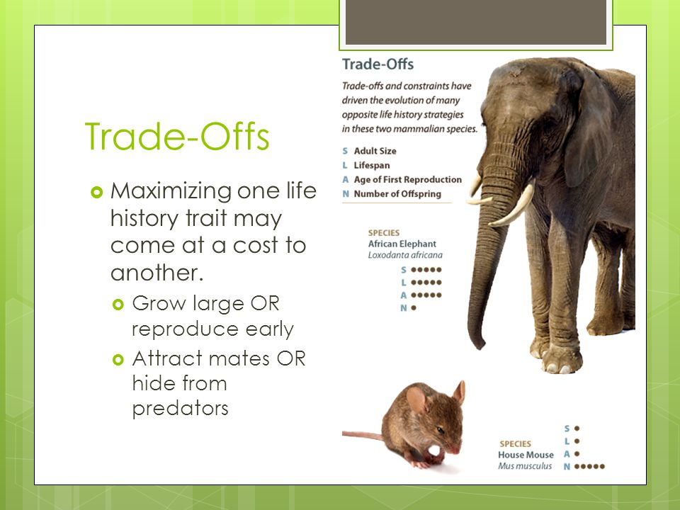Trade-Offs Maximizing one life history trait may come at a cost to another. Grow large OR reproduce early.