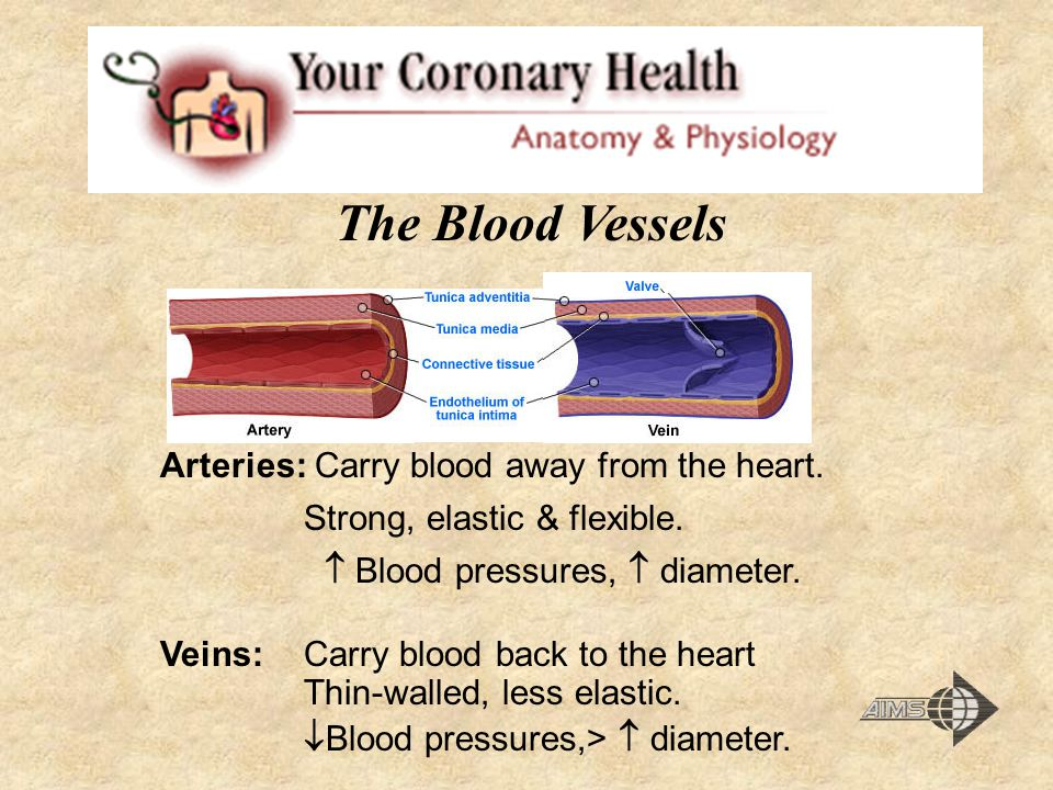 The Blood Vessels Arteries: Carry blood away from the heart.