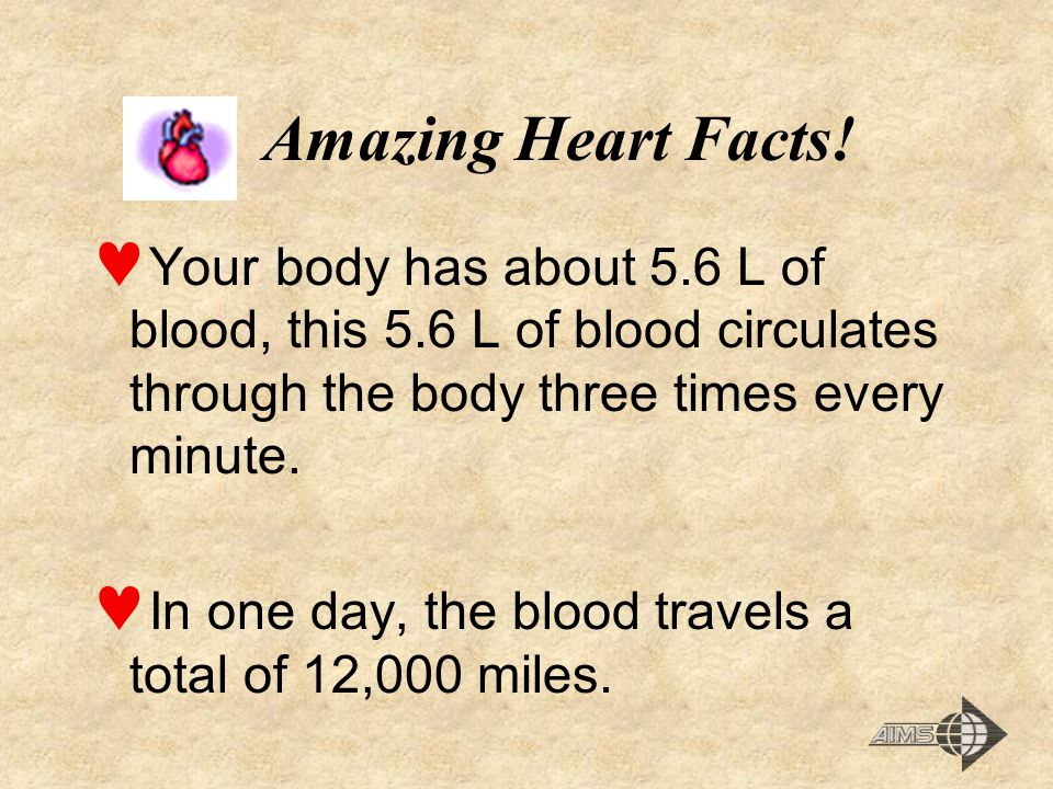 Amazing Heart Facts! Your body has about 5.6 L of blood, this 5.6 L of blood circulates through the body three times every minute.