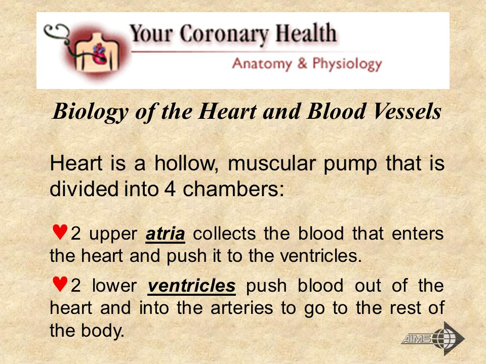 Biology of the Heart and Blood Vessels