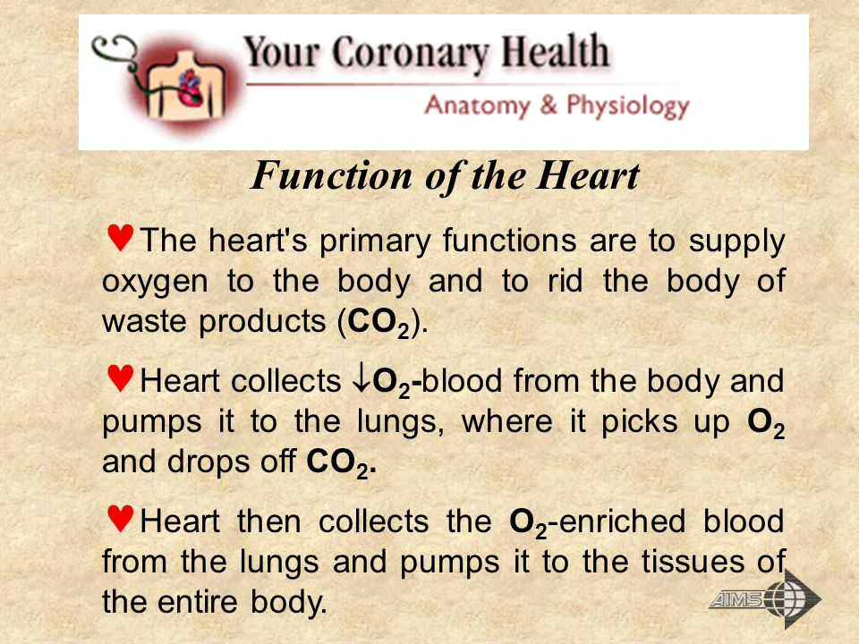 Function of the Heart The heart s primary functions are to supply oxygen to the body and to rid the body of waste products (CO2).