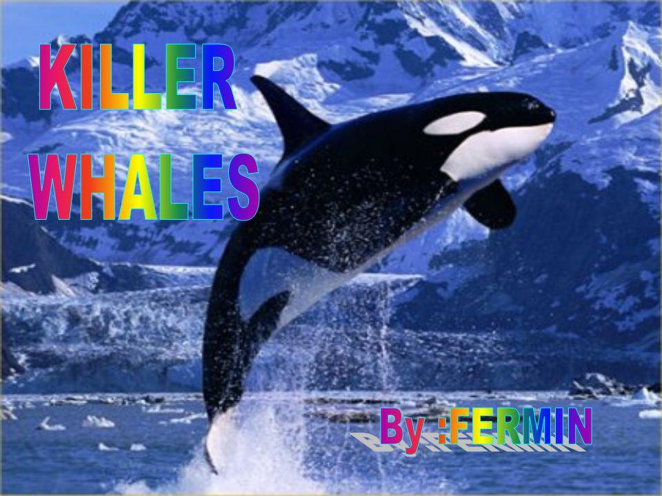 KILLER WHALES By :FERMIN