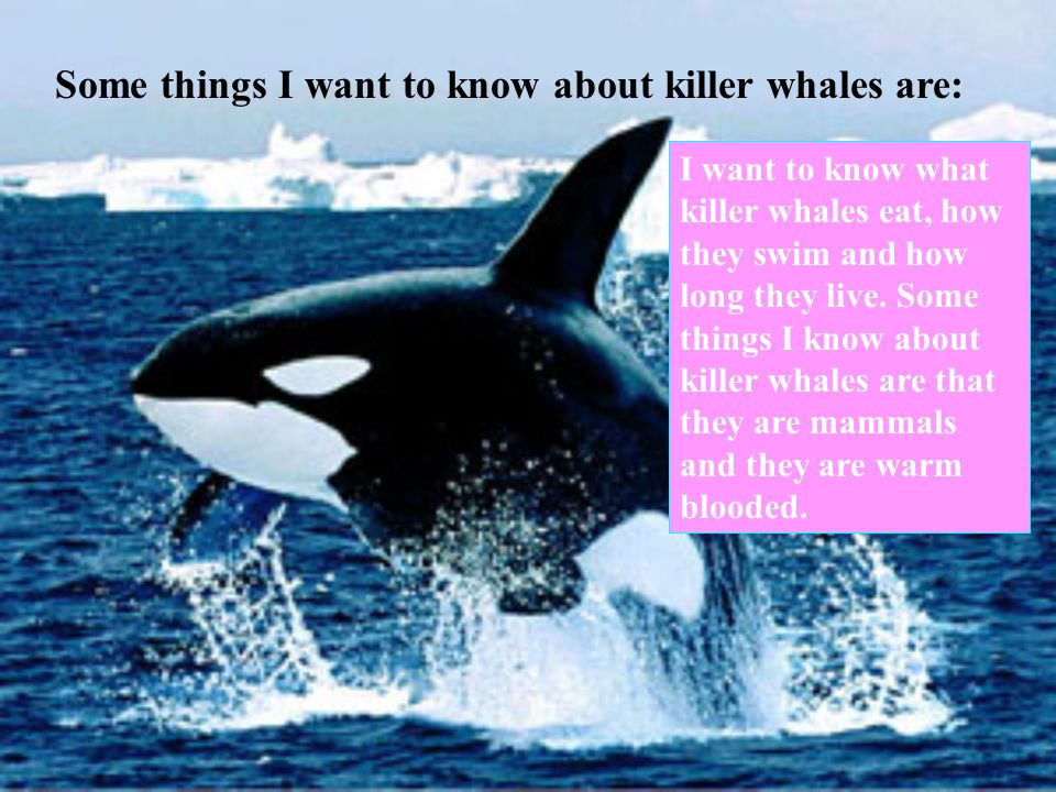 Some things I want to know about killer whales are: