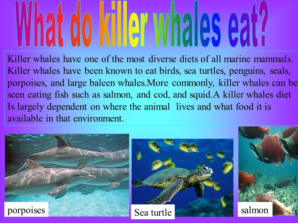 Killer whales by fermin ppt video online download for All fish diet