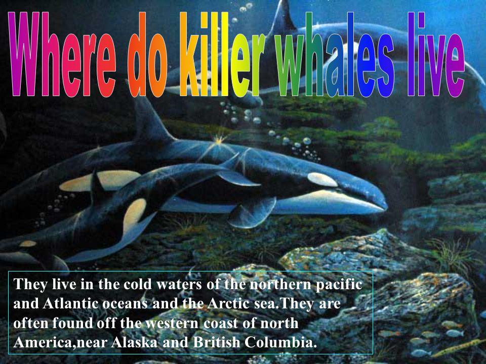 Where do killer whales live