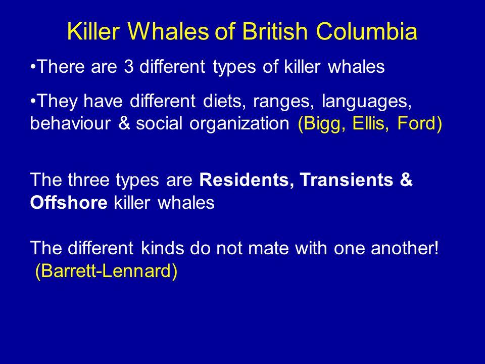 Killer Whales of British Columbia