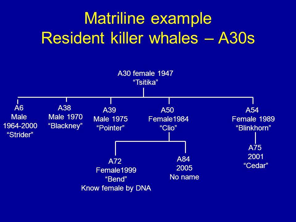 Matriline example Resident killer whales – A30s