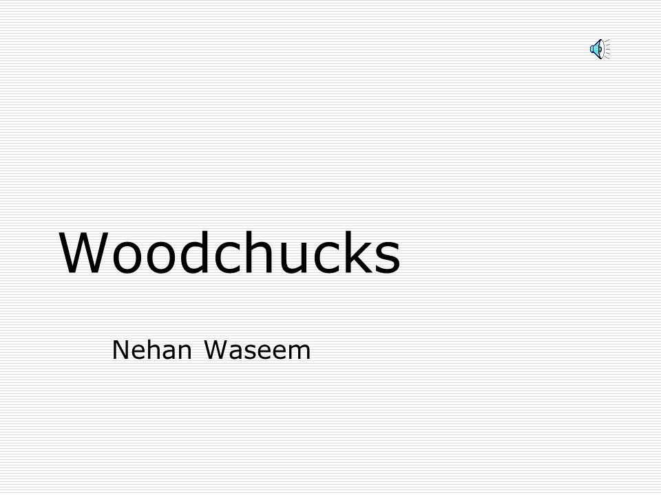 Woodchucks Nehan Waseem