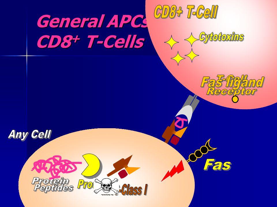 General APCs & CD8+ T-Cells