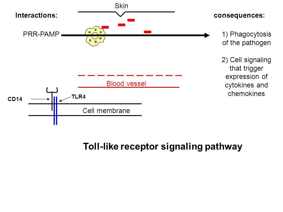 Toll-like receptor signaling pathway