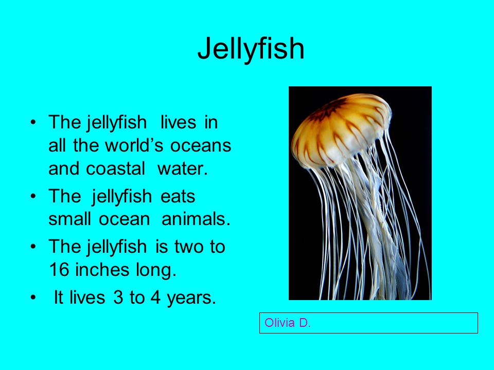 Jellyfish The jellyfish lives in all the world's oceans and coastal water. The jellyfish eats small ocean animals.