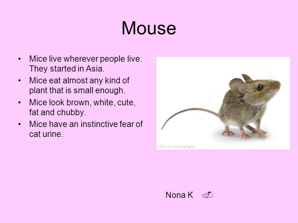 Mouse Mice live wherever people live. They started in Asia.