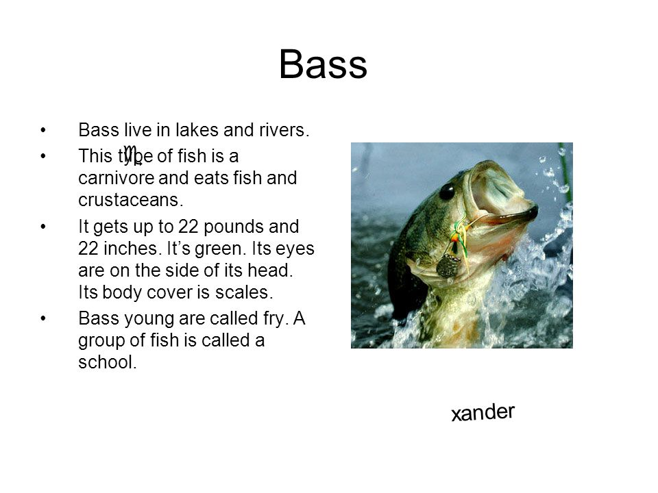 Bass e xander Bass live in lakes and rivers.