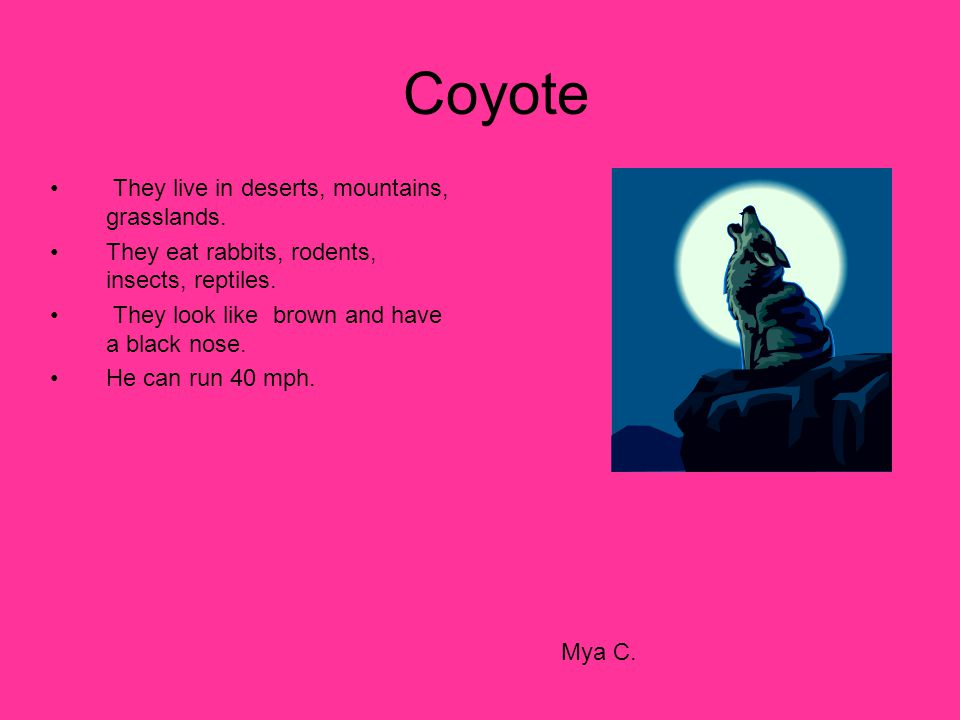 Coyote They live in deserts, mountains, grasslands.