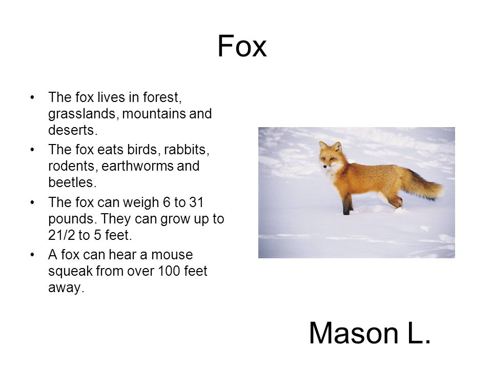 Fox The fox lives in forest, grasslands, mountains and deserts. The fox eats birds, rabbits, rodents, earthworms and beetles.