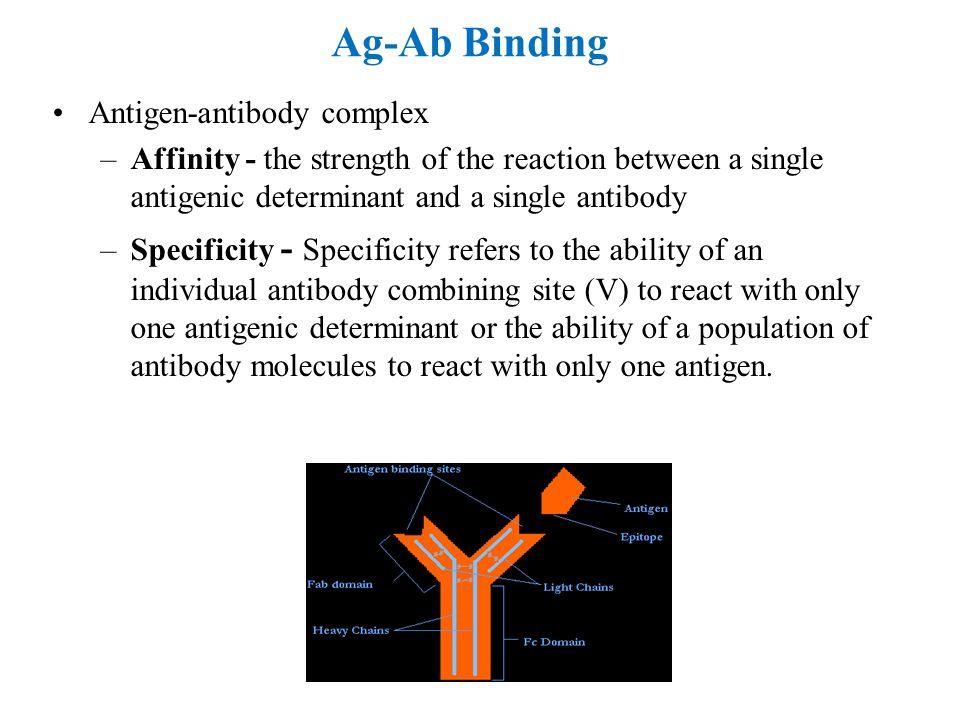 Ag-Ab Binding Antigen-antibody complex