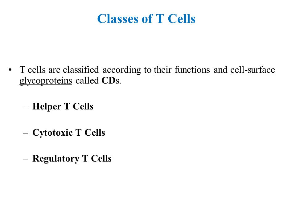 Classes of T Cells T cells are classified according to their functions and cell-surface glycoproteins called CDs.