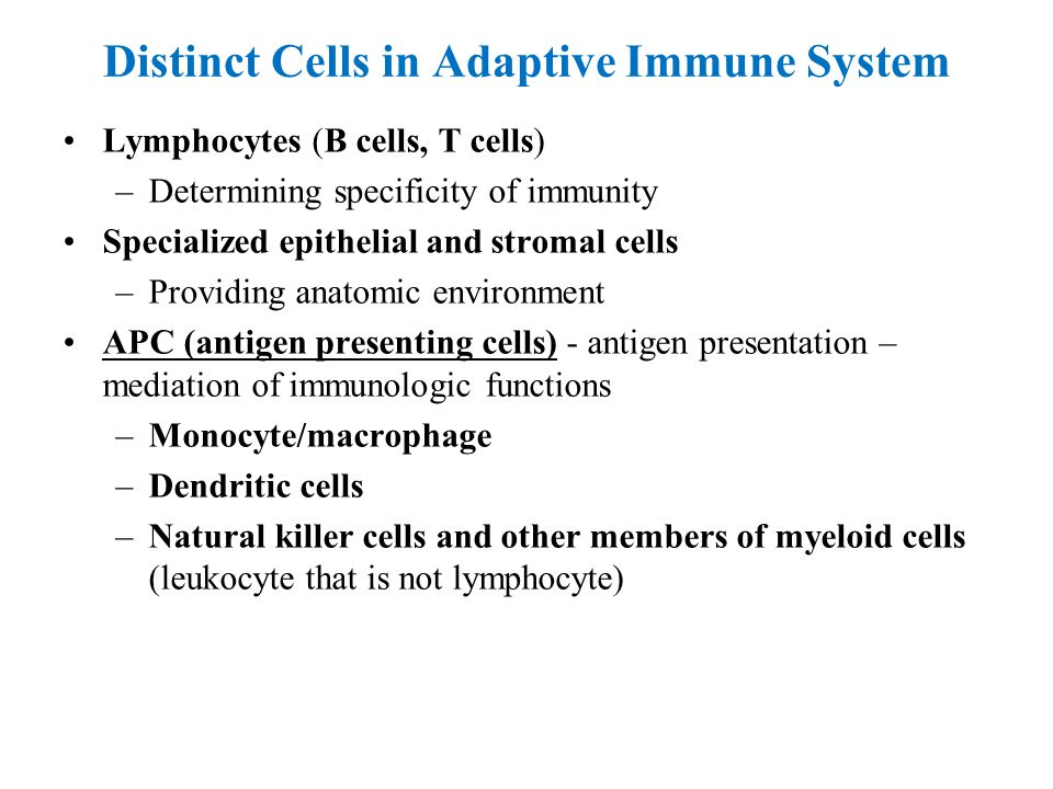 Distinct Cells in Adaptive Immune System