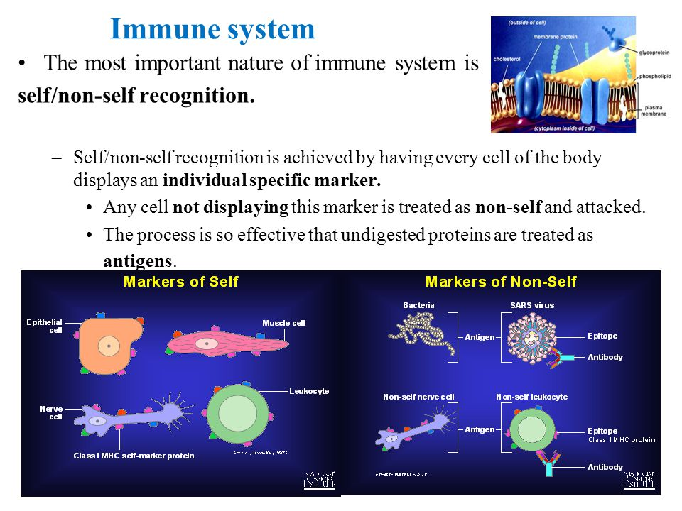 Immune system The most important nature of immune system is