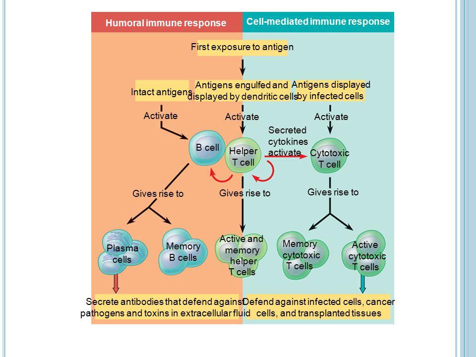 Humoral immune response Cell-mediated immune response