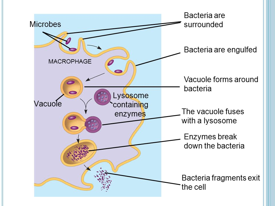 Bacteria are surrounded Microbes