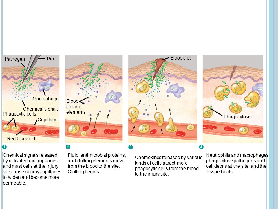 Fluid, antimicrobial proteins, and clotting elements move