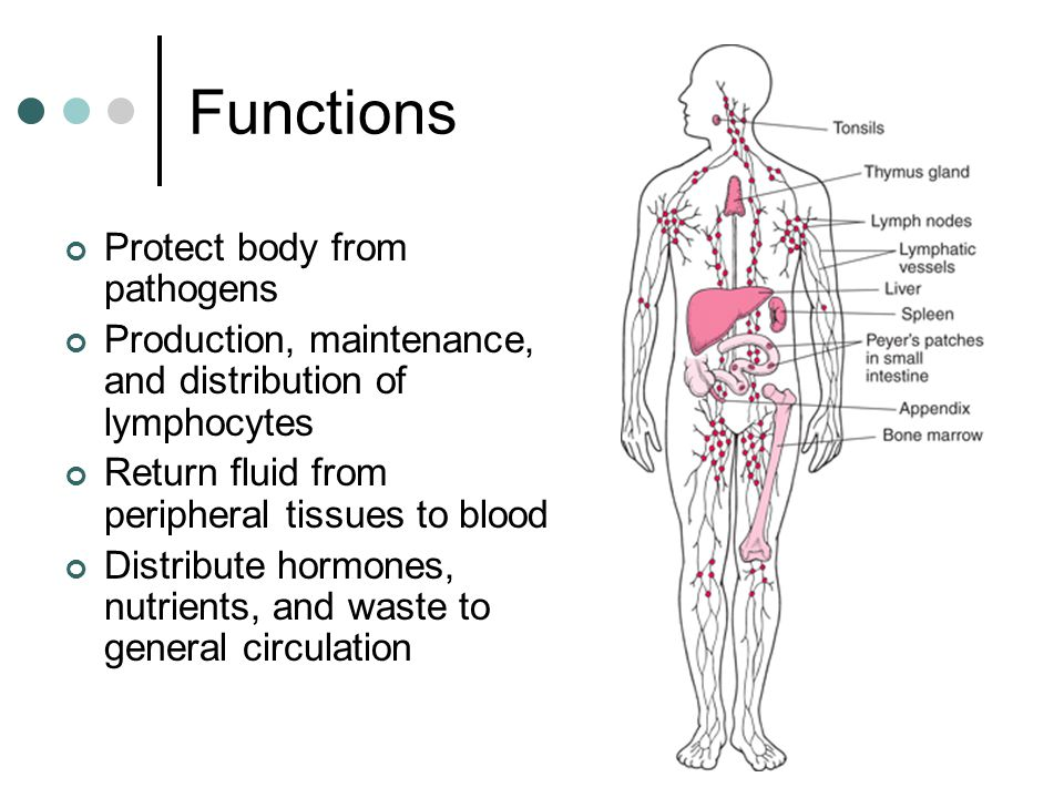 Functions Protect body from pathogens