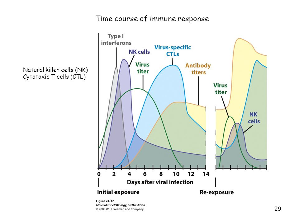 Time course of immune response