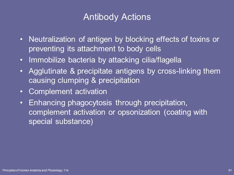 Antibody Actions Neutralization of antigen by blocking effects of toxins or preventing its attachment to body cells.