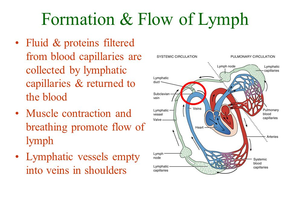 Formation & Flow of Lymph