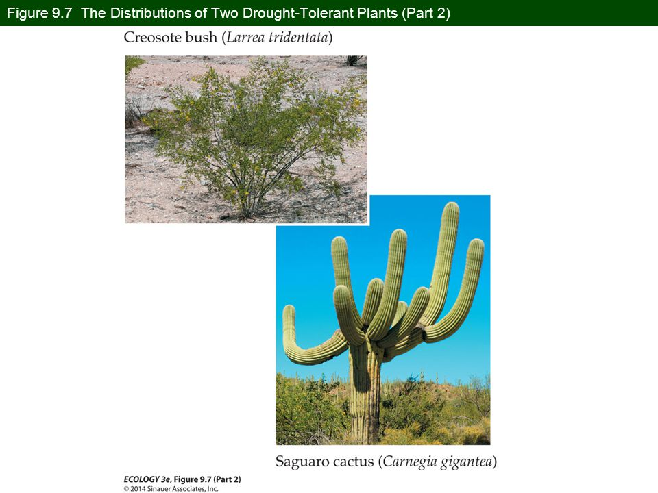 Figure 9.7 The Distributions of Two Drought-Tolerant Plants (Part 2)