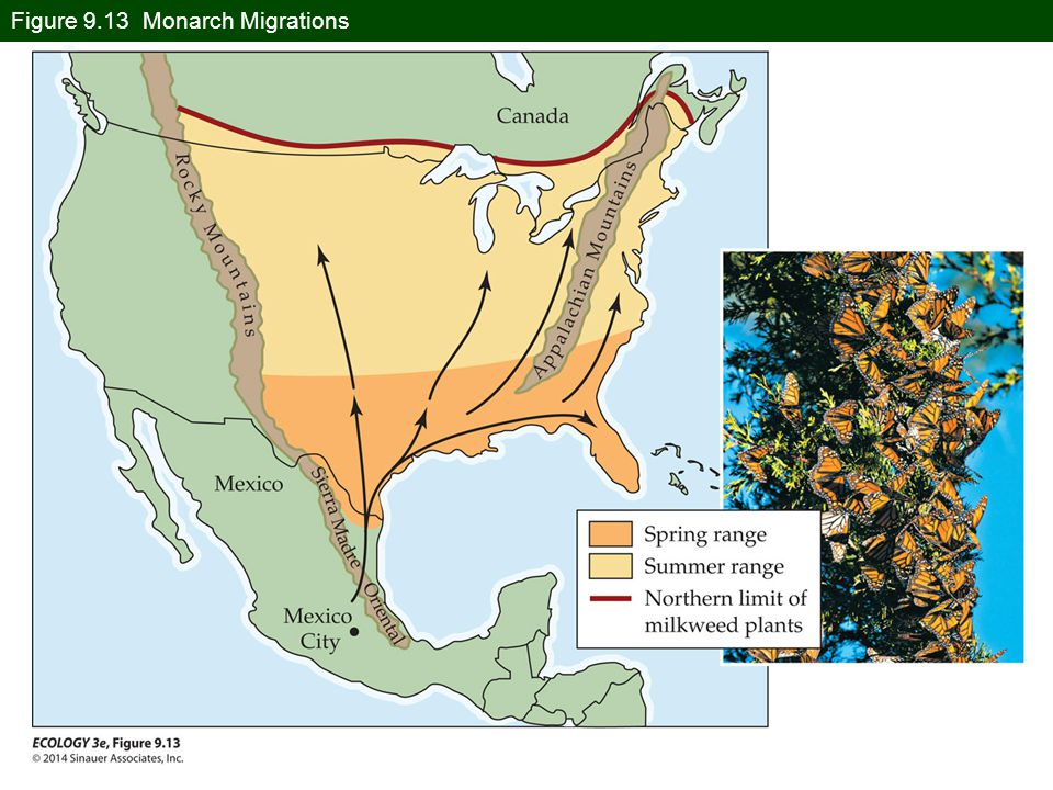 Figure 9.13 Monarch Migrations