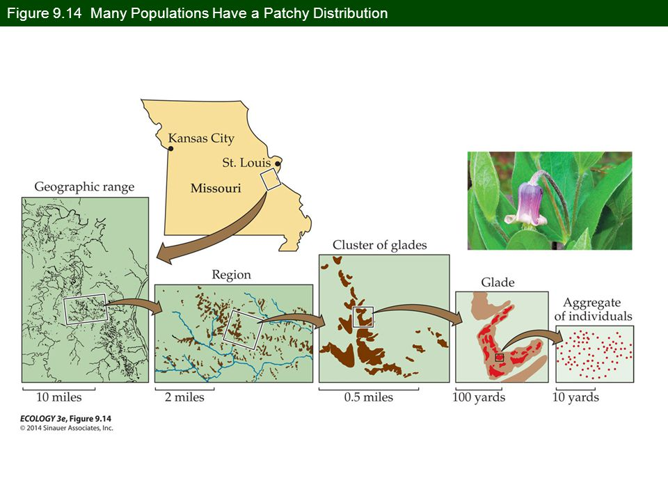 Figure 9.14 Many Populations Have a Patchy Distribution