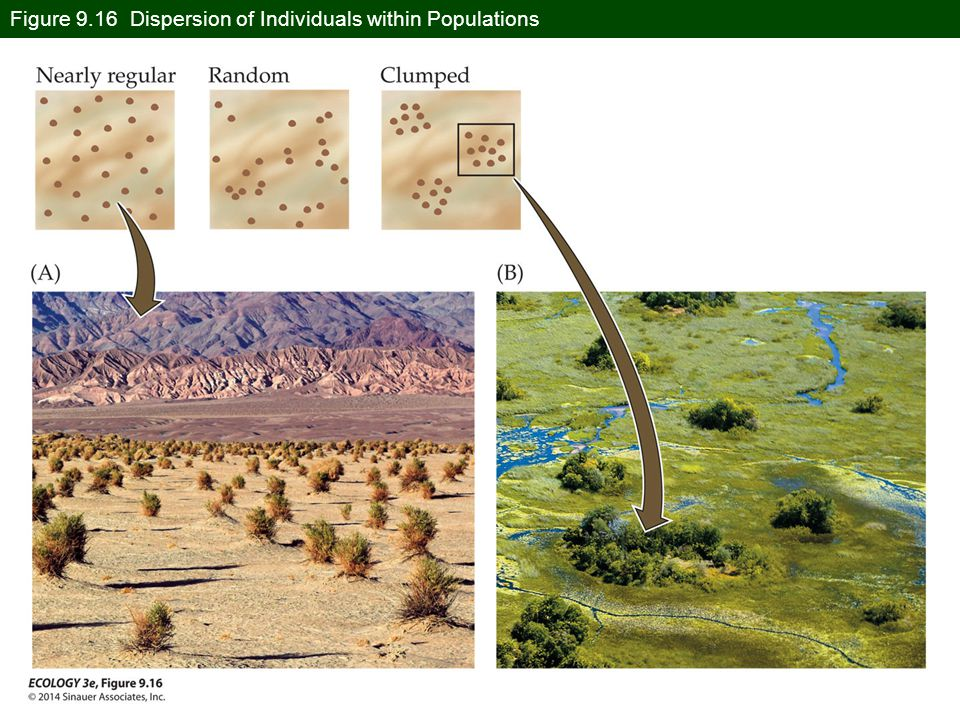 Figure 9.16 Dispersion of Individuals within Populations